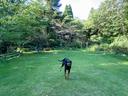 芝生を駆ける