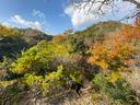 秋の山は美しい