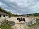 妻が乗馬体験